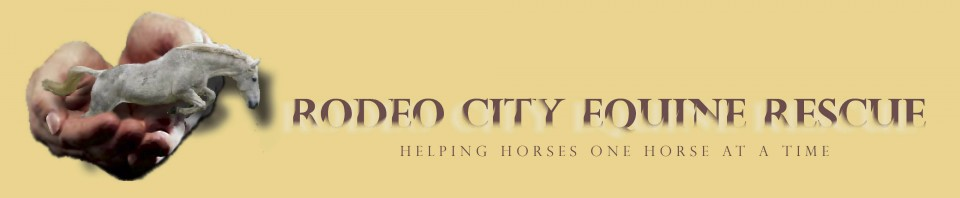 Rodeo City Equine Rescue. Helping Horses One Horse at a Time.
