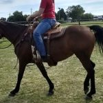 Pretty under saddle 1st time