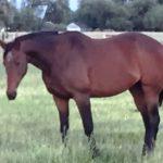 beebes pasture