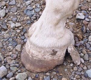 o'mally foot 001
