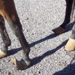 sassy feet1