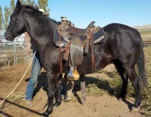 wendy saddled (1)